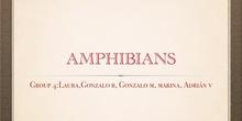 P2_NS Amphibians A