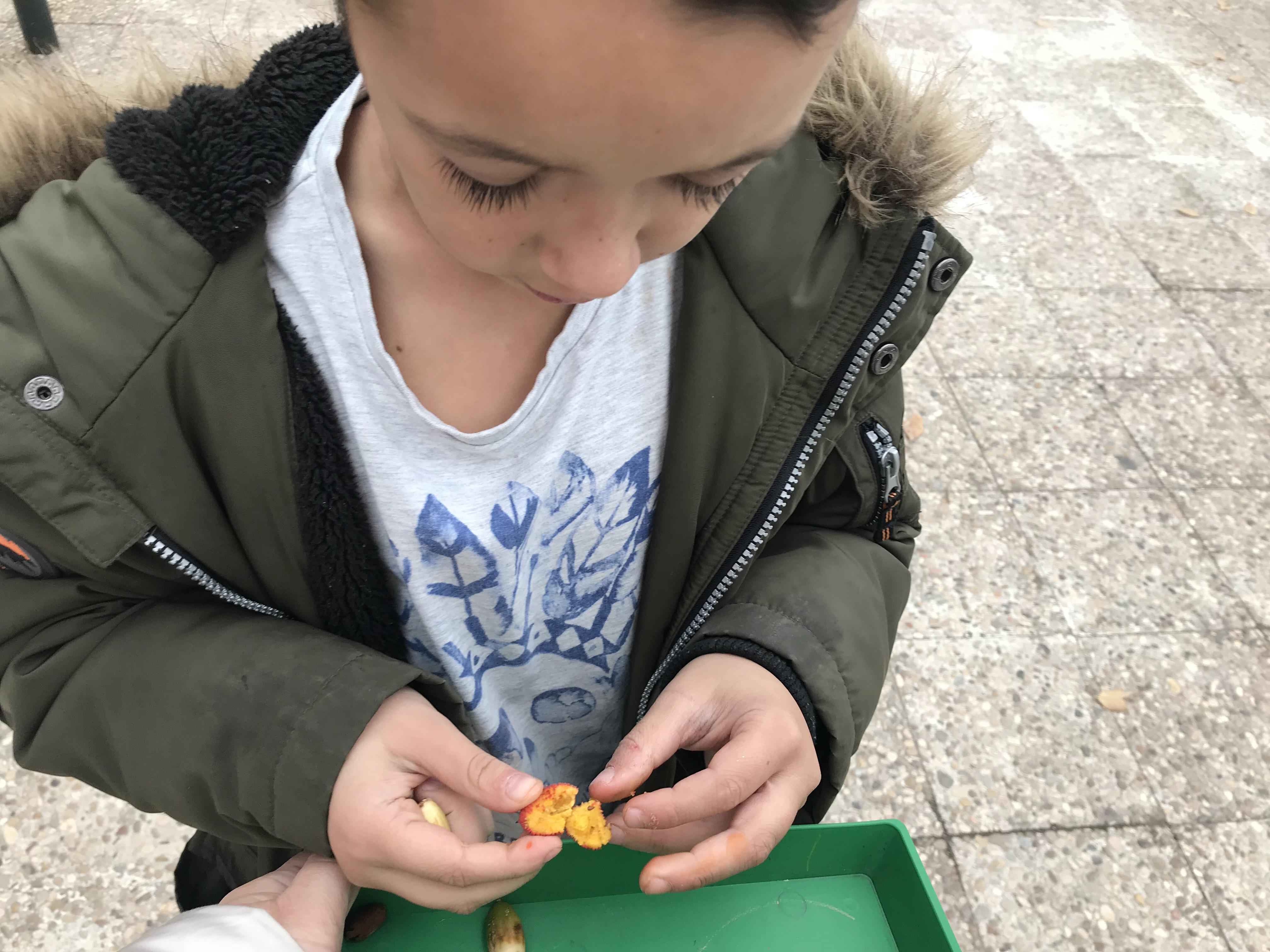 2018_12_05_1º Y 2º TRABAJAN LA BIODIVERSIDAD_PROYECTO THE GREAT PLANT HUNT_CEIP FDLR_Las Rozas