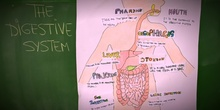 PRIMARIA 3º - NATURAL SCIENCE - THE DIGESTIVE SYSTEM - ACTIVIDADES
