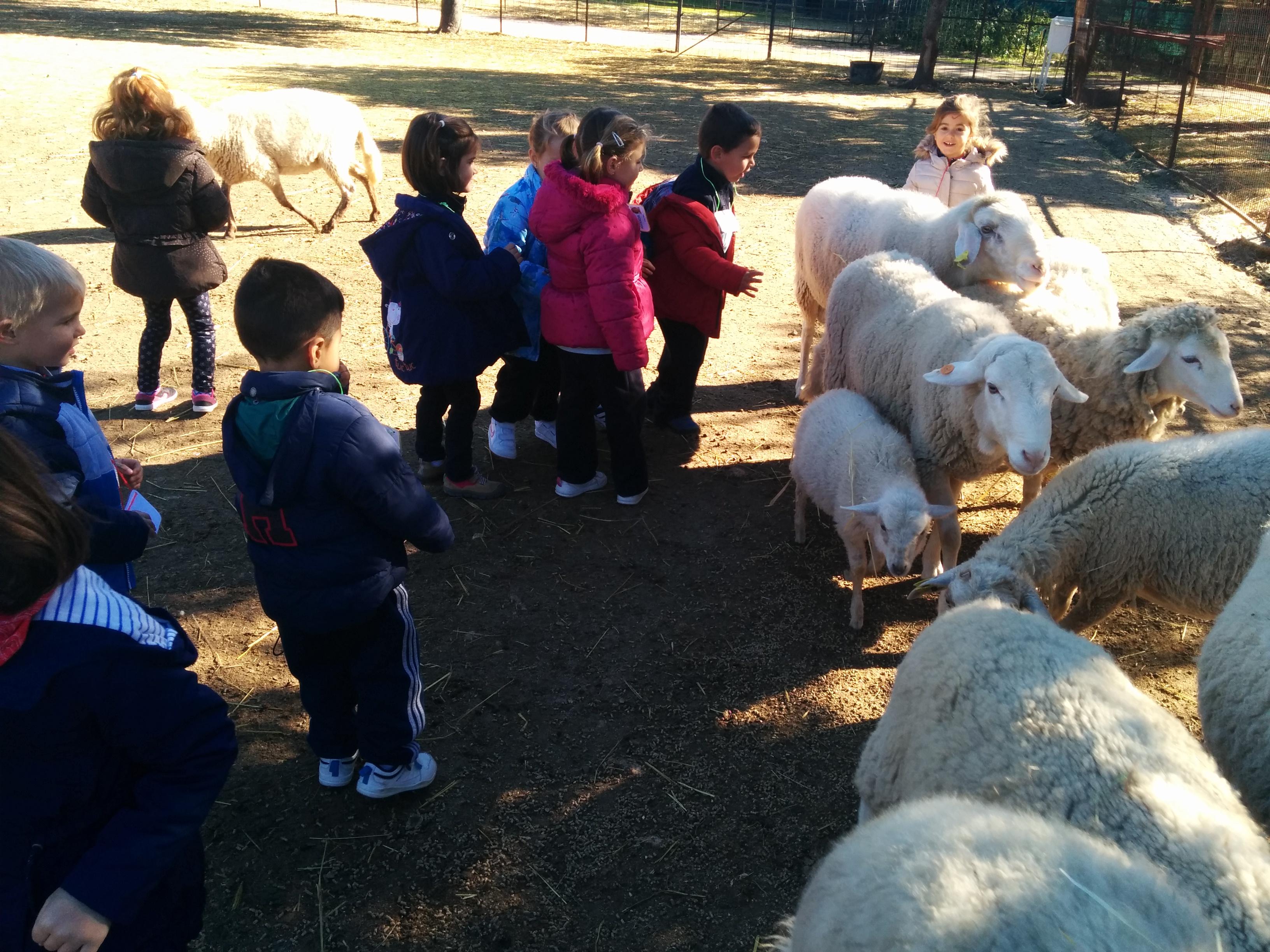 2016_inf 4 años a visita la granja 27
