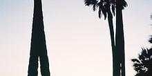 Amanecer entre palmeras, Namibia