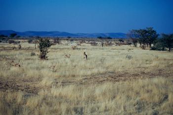 Sabana africana, Namibia