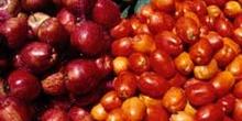 Hortalizas (pepinos, tomates) y frutas (manzanas)