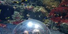 Aquarium Xanadú II 3ºB  9