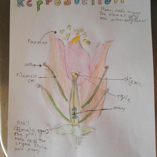 Oscar Cordero Flower Project