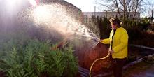 Mujer regando las plantas en un vivero
