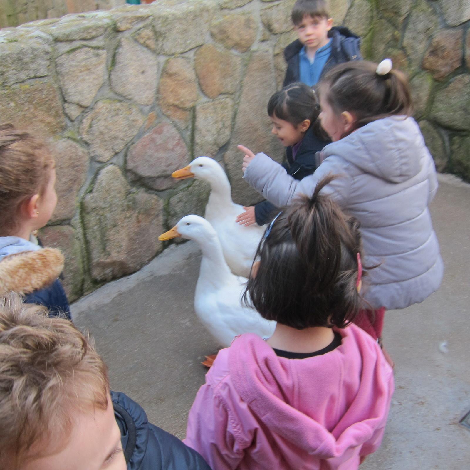Granja Escuela Educación Infantil Curso 2017-18_2 10