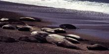 Lobos marinos del Sur, Argentina