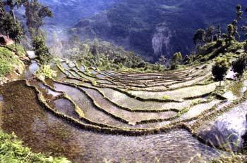Campos de cultivo aterrazados, Sikkim, India
