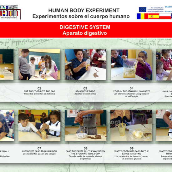 Human Body experiment 03 Digestive system