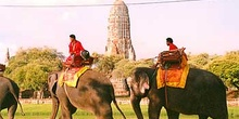Elefantes en Ayutthaya, Tailandia