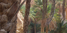 Palmeras, Oasis de montaña, Chébika, Túnez