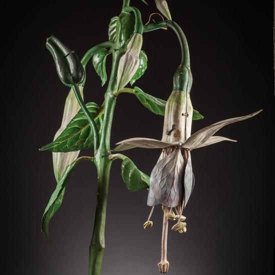 IES_SANISIDRO_MUSEO_Botanica_038