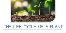 PRIMARIA 1º - CIENCIAS DE LA NATURALEZA - THE LIFE CYCLE OF A PLANT