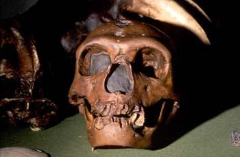 Homo sapiens neanderthalensis (Mamífero-Homínido) Pleistoceno