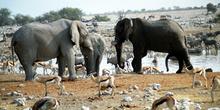 Reunión de elefantes, Namibia