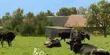 Ökologischer Landbau. Gut für die Natur, gut für Sie!
