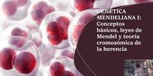 Tema 6 Genética mendeliana I: Conceptos básicos, leyes de Mendel y teoría cromosómica