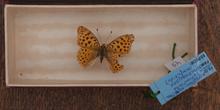 IES_CARDENALCISNEROS_Insectos_020