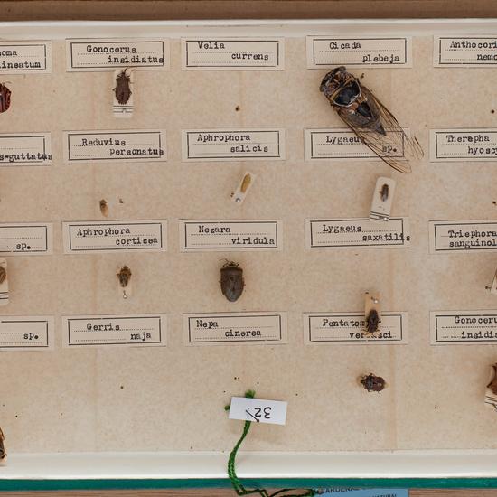 IES_CARDENALCISNEROS_Insectos_018
