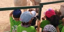 Infantil 3 años en la granja_CEIP Fernando de los Ríos_Las Rozas_2017-2018 16
