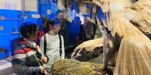 Excursión al Museo Nacional de Ciencias Naturales 10