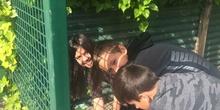 2019_05_Los alumnos de 4º en el Huerto_CEIP FDLR_Las Rozas 38