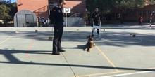 La Unidad Canina de la Policia Municipal de Las Rozas visita el cole_CEIP FDLR_Las Rozas_2017  1