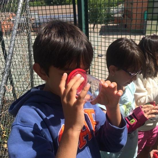 2019_06_11_4º observa insectos en el huerto_1_CEIP FDLR_Las Rozas 8