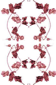 Simetría de la rama de lúpulo en granates oscuros
