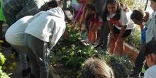 5º A en el huerto_CEIP FDLR_Las Rozas 3