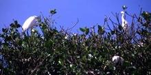 Aves acuáticas en las orillas del río Dulce, Livingston, Guatema