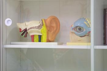 Ojo y oído