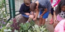 2019_06_07_Los alumnos de Quinto observan los insectos del huerto_CEIP FDLR_Las Rozas 6