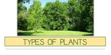 PRIMARIA 1º - CIENCIAS DE LA NATURALEZA - TYPES OF PLANTS