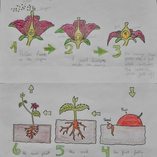 Ainara Martin life cycle of a plant