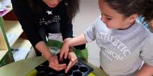 Susan helps us plant tomato seeds
