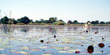 Nenúfares, Botswana