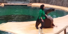 Visita al zoo 2019 13
