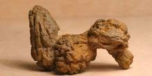 Coprolito de Tortuga (Reptil) Oligoceno