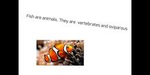 PRIMARIA_TERCERO_FISH_NATURAL SCIENCE_BERTA, ANASTASIA, ANTONIO, ALBERTO_FORMACIÓN