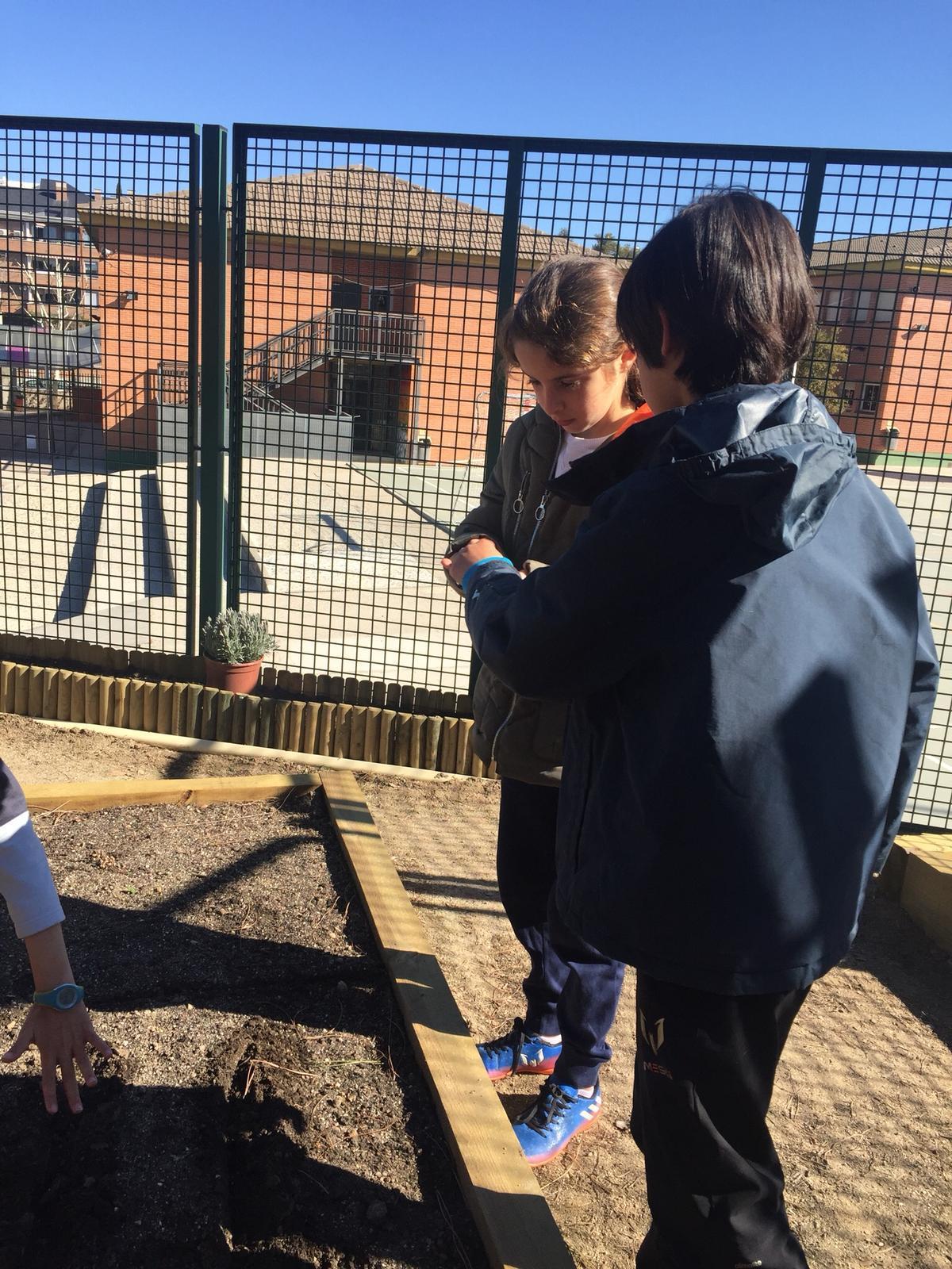 Quinto de Primaria_Taller de Huerto Escolar_CEIP Fernando de los Ríos_Las Rozas 7