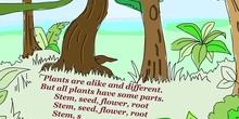 PRIMARIA - PRIMER CICLO - KET - PLANTS - FORMACIÓN.MOV