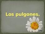 Los pulgones