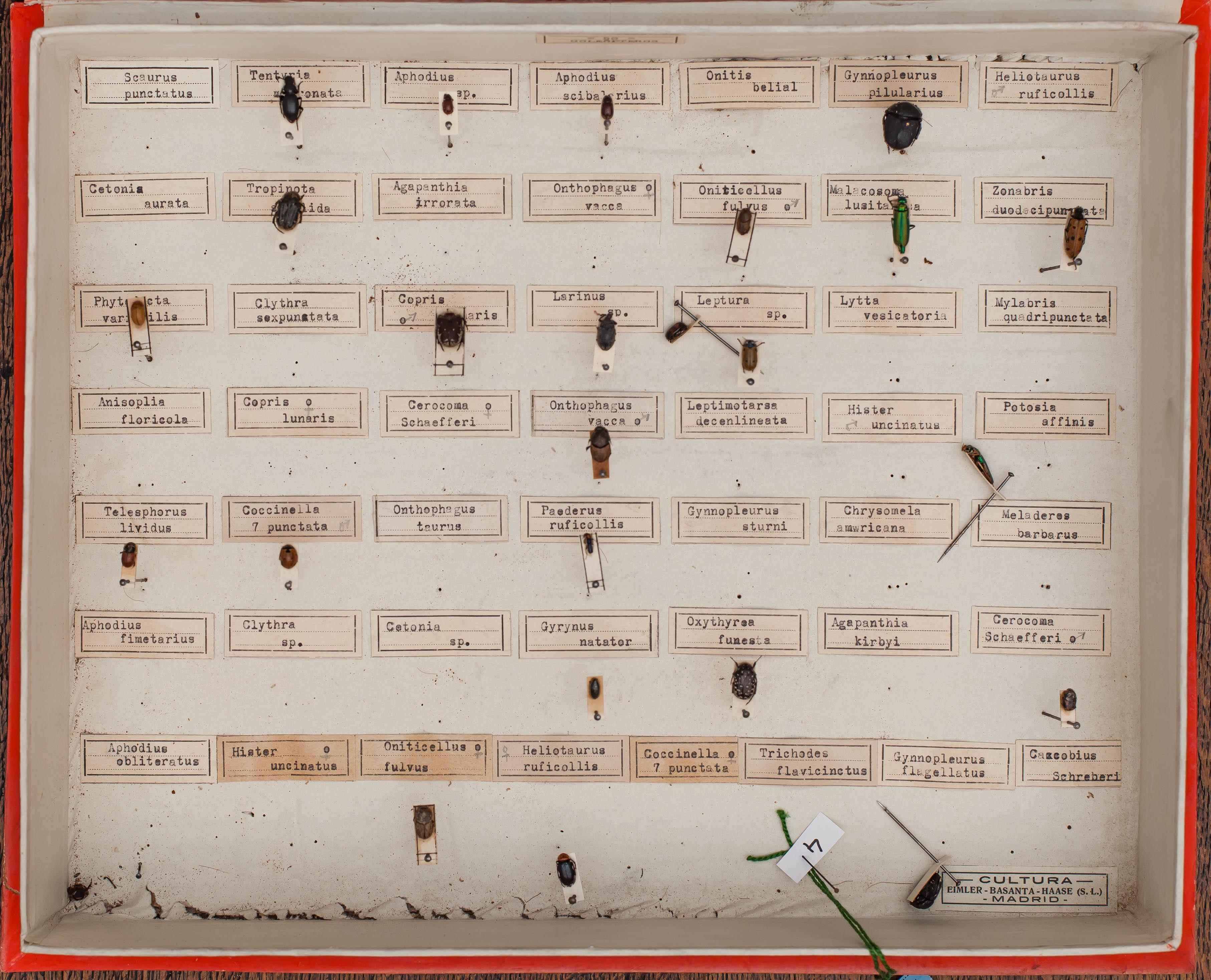 IES_CARDENALCISNEROS_Insectos_043