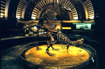 Vista de conjunto con pareja copulando de Tyrannosaurus rex (Din