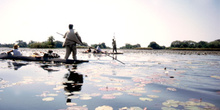 Nenúfares y chalupas en el Delta del Okawango, Botswana