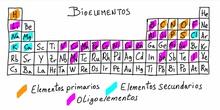 Vídeo Bioelementos