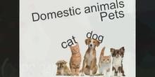 Primaria Inglés Domestic Animals