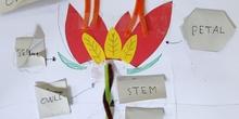 4º estudia las partes de las plantas